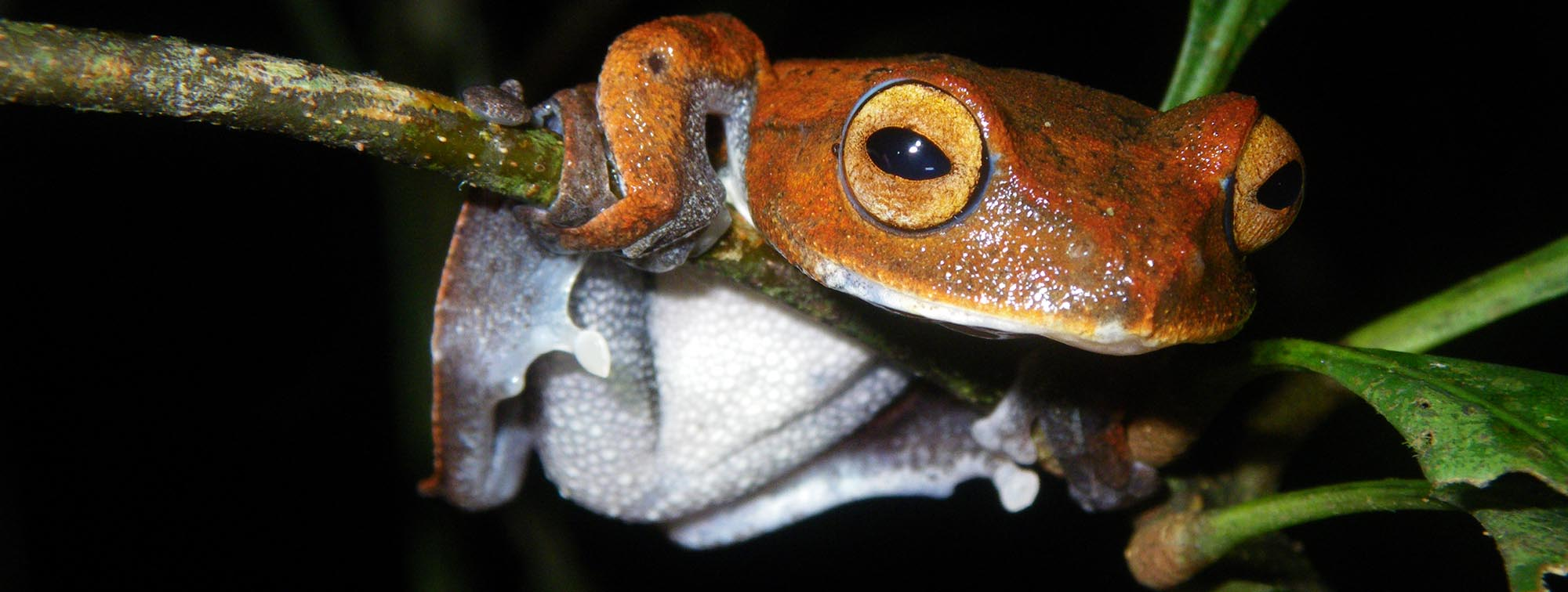 Why the official conservation status of species matters